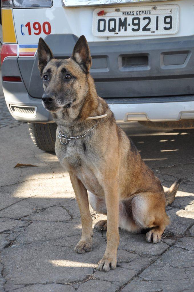 Thor, o cão farejador que ajudou a encontrar drogas durante a operação